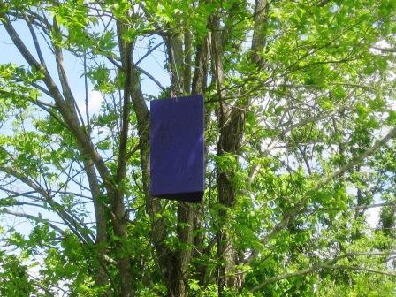 Have you seen these in trees around Virginia?