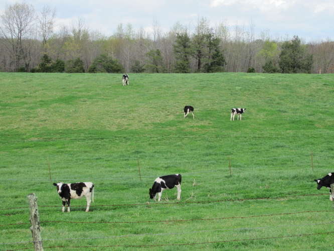 Currently leased for cattle.