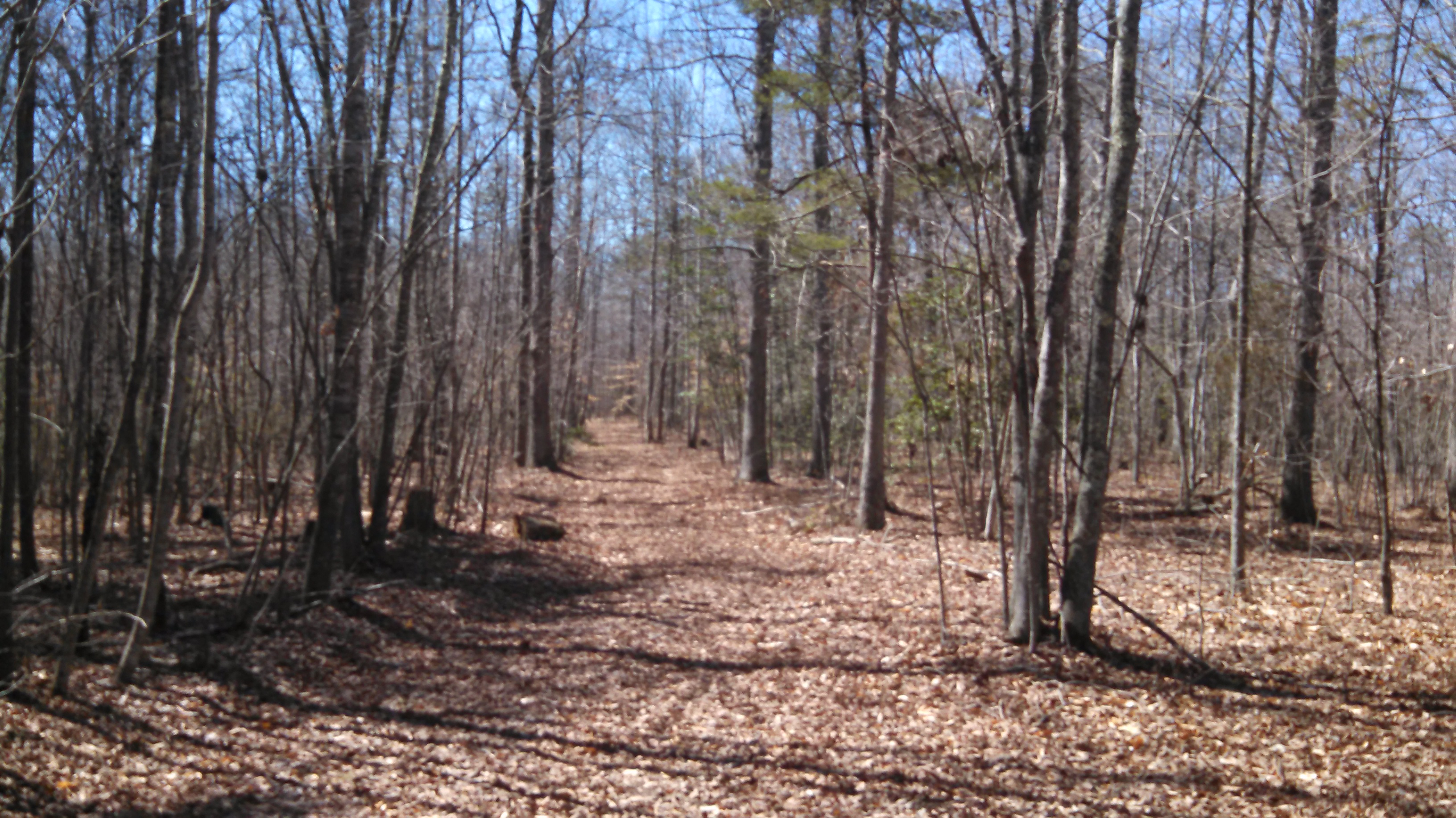 25+/- acre woods/wildlife parcel