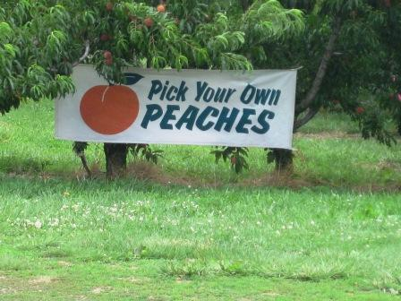 It's peach time in Central Virginia